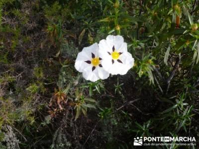 Senderismo Madrid - Pantano de San Juan - Embalse de Picadas; rutas riaza
